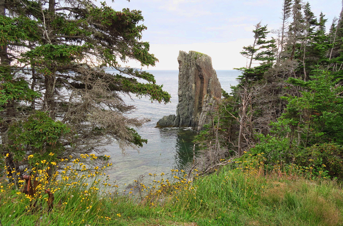 Right away, the trees open up and beautiful tall sea stacks come into view.