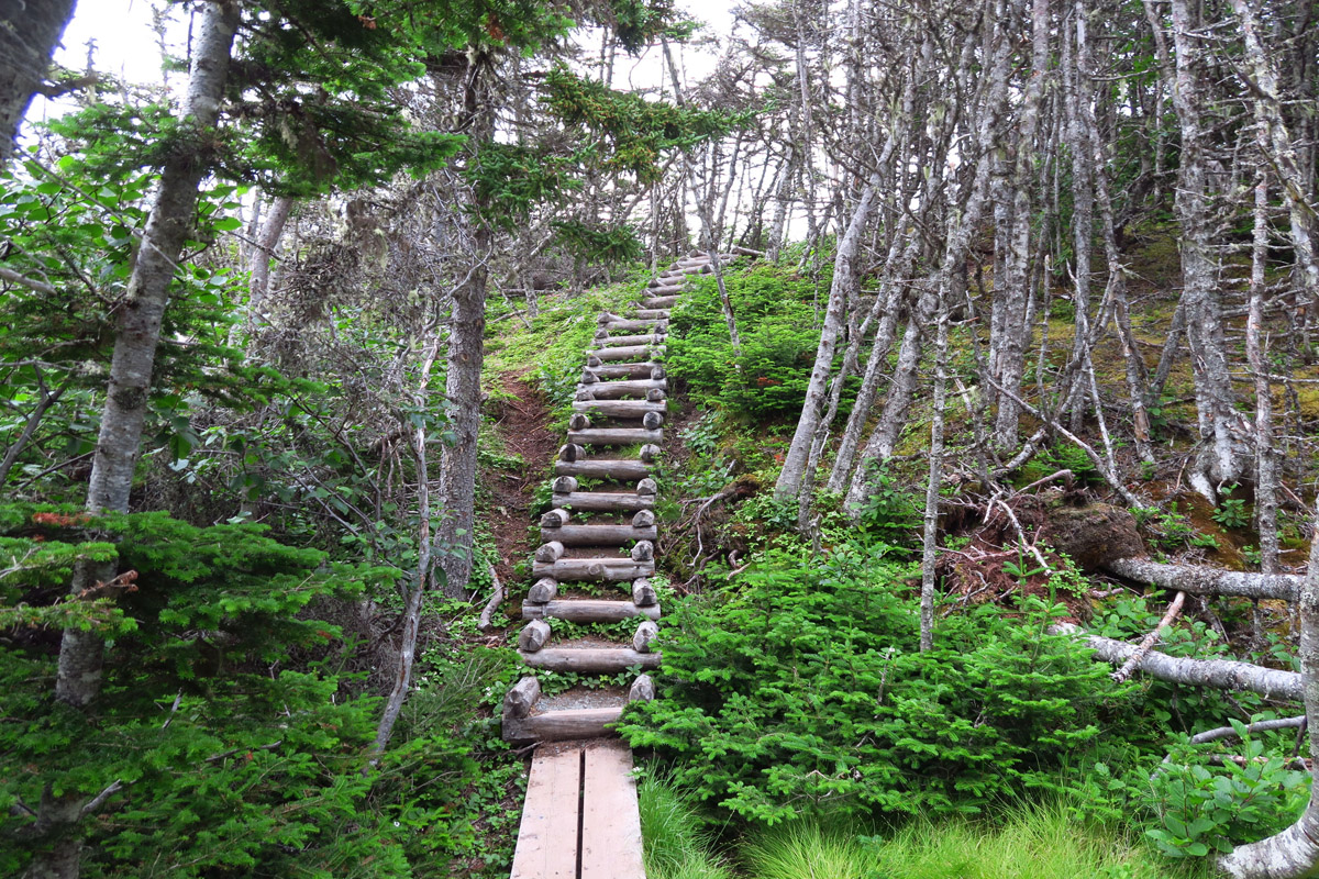 There are a lot of stairs along the trail as it climbs up and over the headlands.
