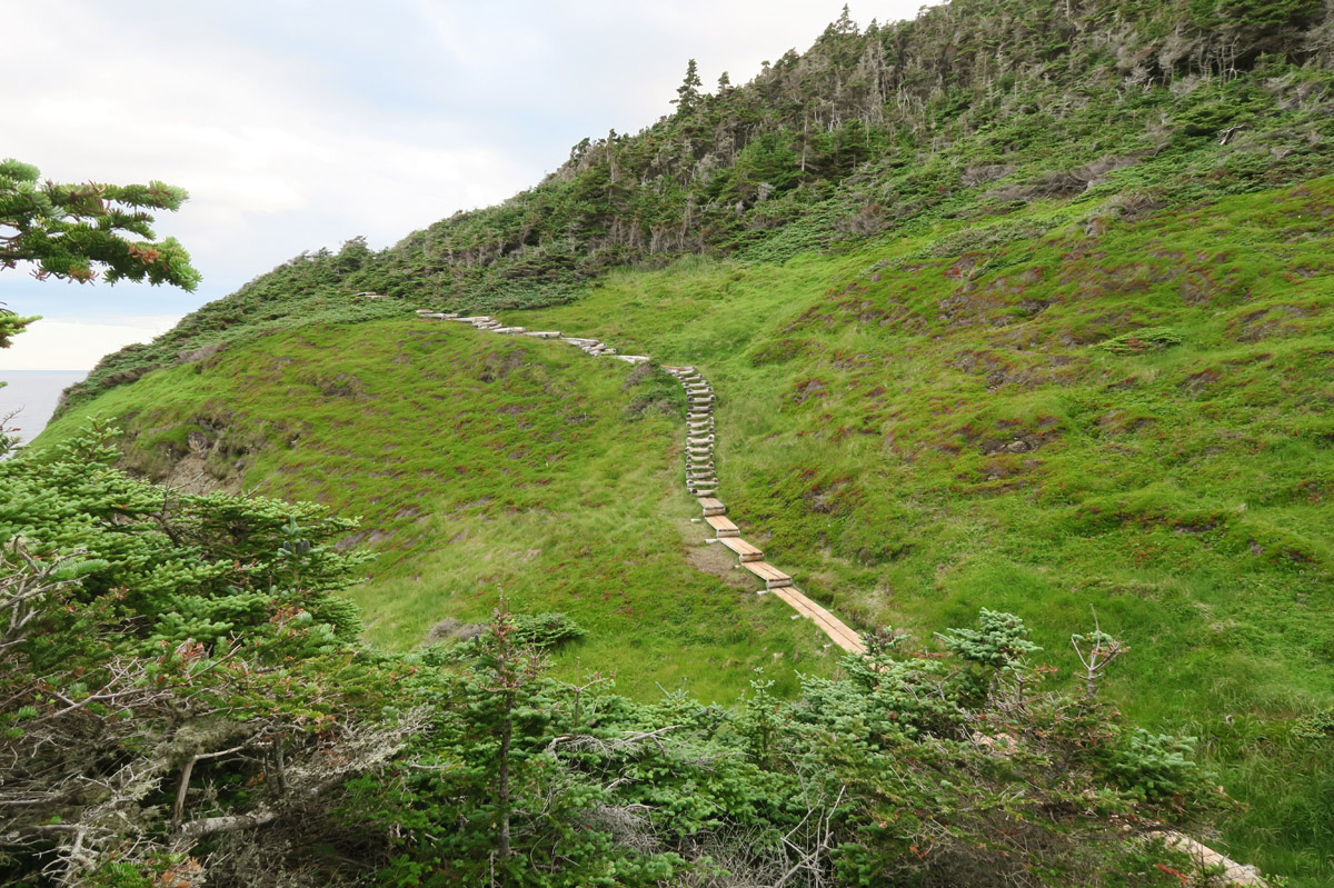 "Much of the trail is flanked by what Newfies call ""tuckamore,"" short, thickly matted spruce or fir trees that grow in coastal areas. Though stunted in stature, they may be several decades old."