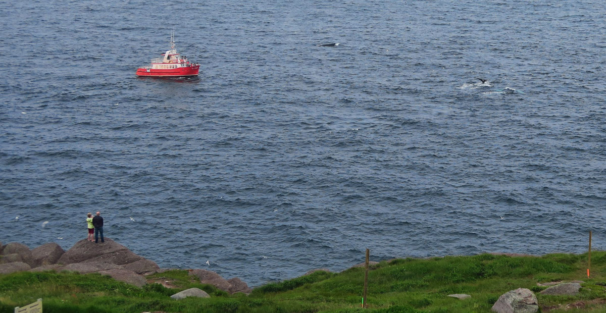 If you click to enlarge this photo, you will see a whale's tale to the right.