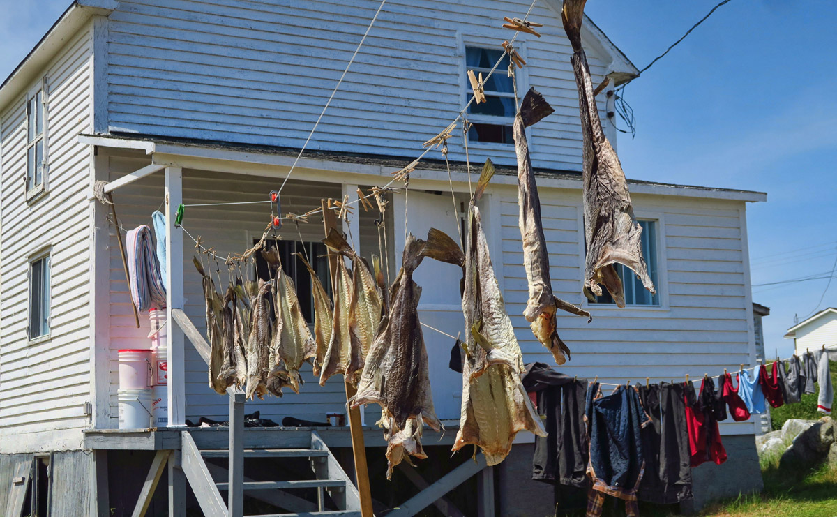 One line for drying the clothes, and one for the cod.