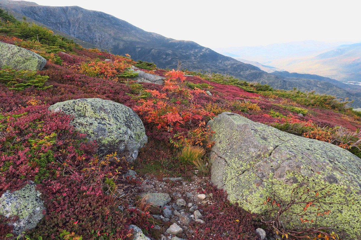 Fall color is more evident in the alpine sections.
