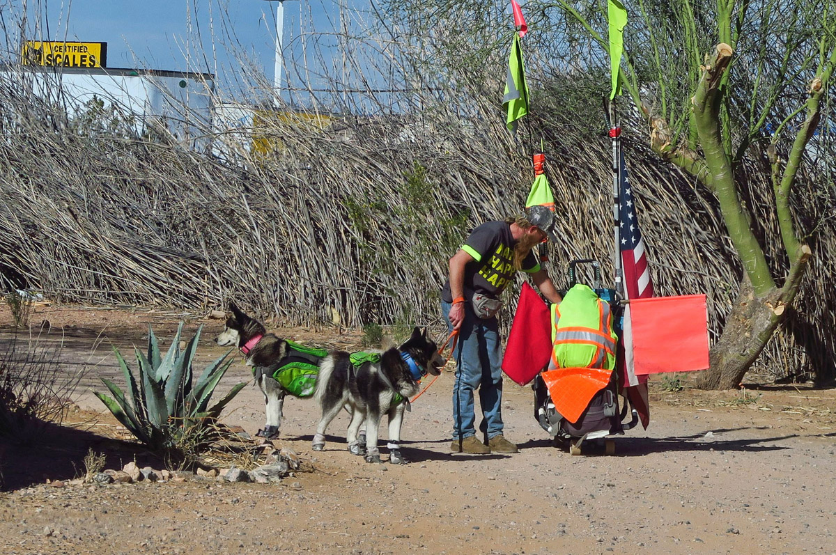 This guy's transportation is a wheeled cart behind two sled dogs...in Arizona.