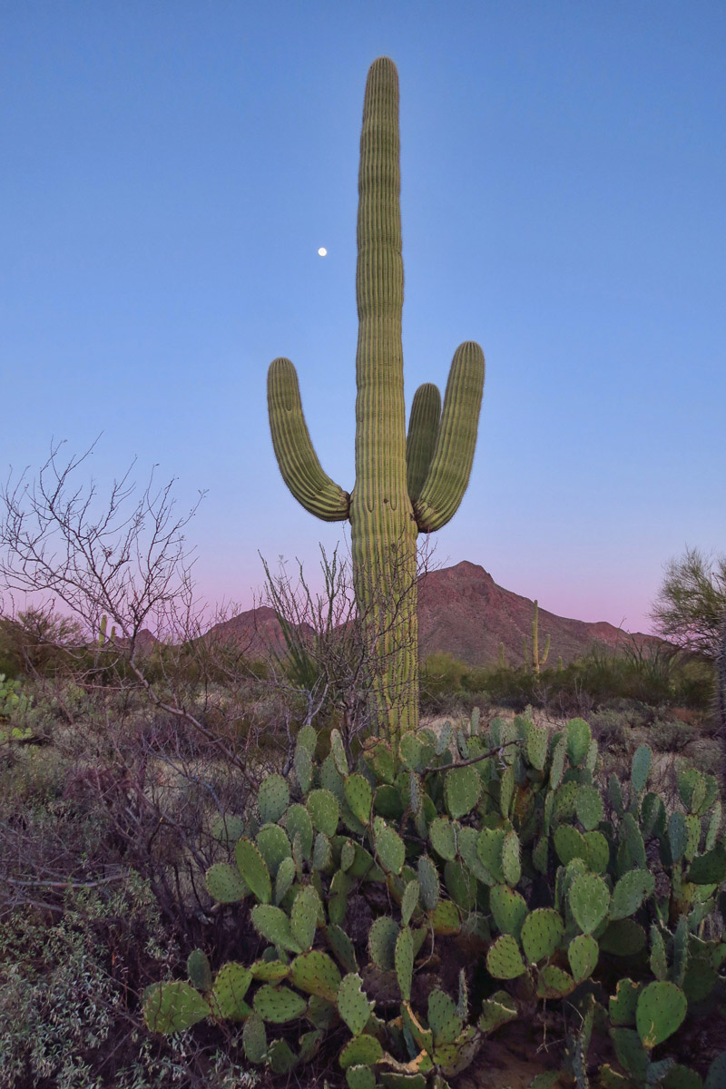 I adore the full moon, so I signed up for the ranger-led Sunset/Moonrise hike in Saguaro National Park.