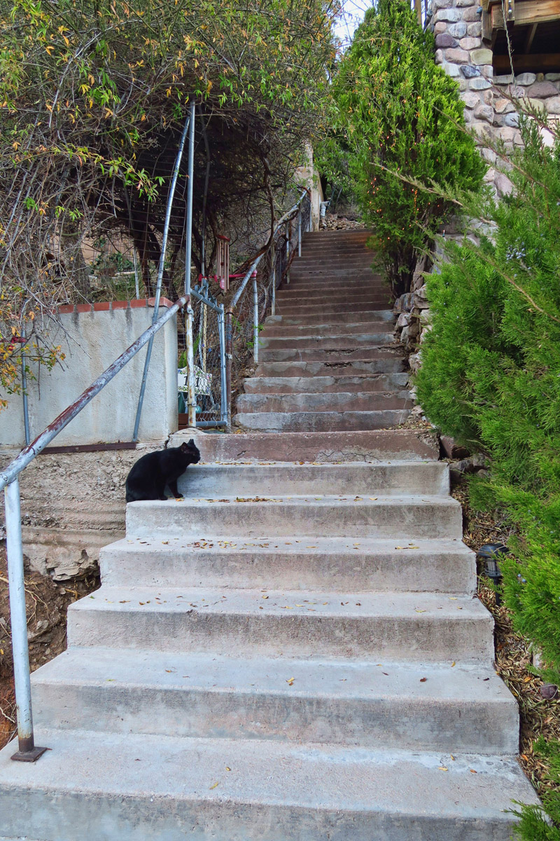 Is a black cat reason enough to skip this section of the Bisbee 1000?