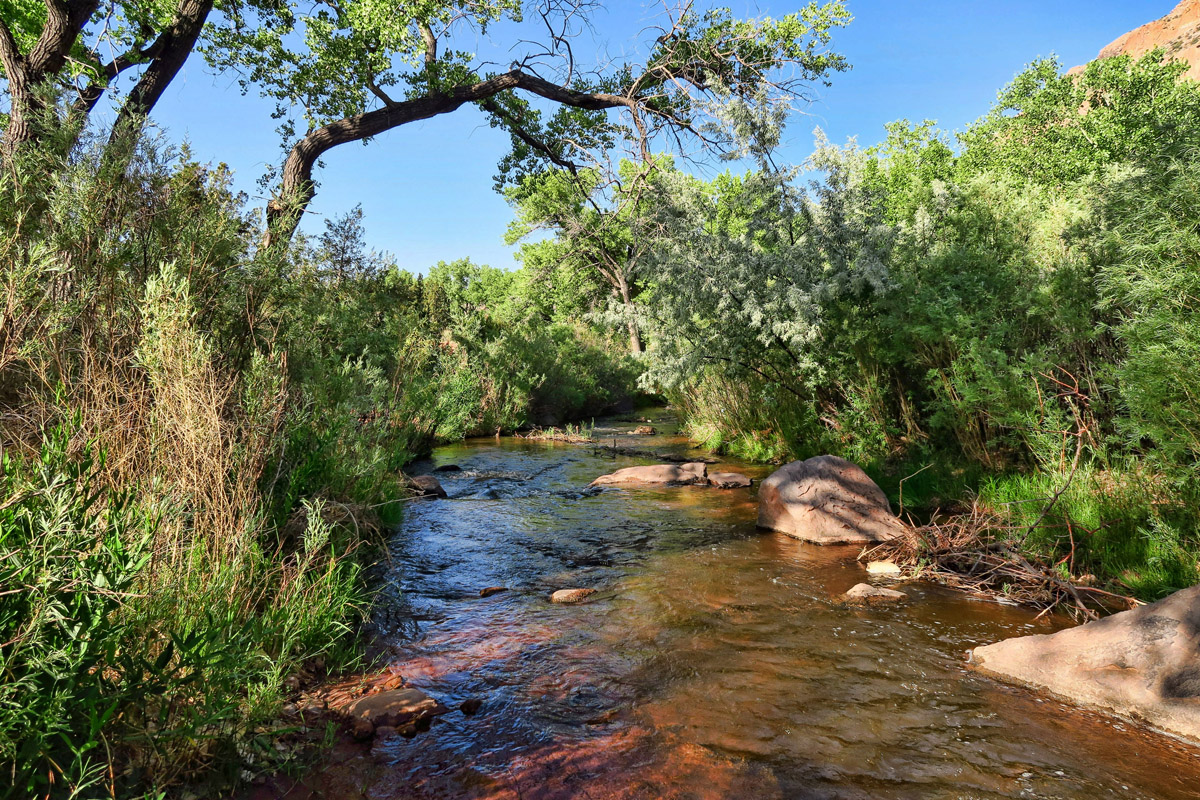 I can hear the Jemez River running right beside me. It lulls me to sleep every night in place of Facebook. ;-)
